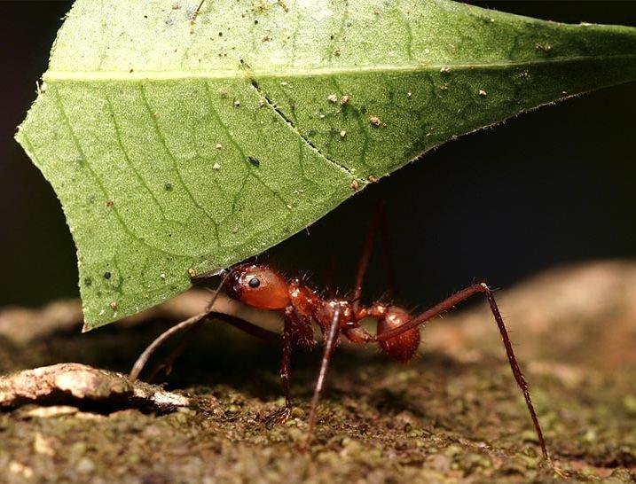 صورة قلب النملة