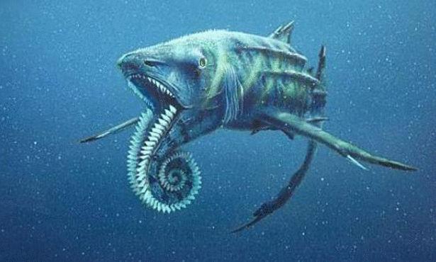 صور صور لاجمل الكائنات البحريه