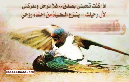 http://vb.chatal3nabi.com/storeimg/1376799834_970.jpg