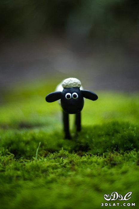 صور خرفان بمناسبة عيد الاضحي Sheep خروف العيد 131903664511.jpg