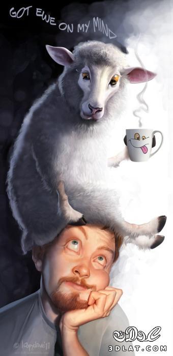 صور خرفان بمناسبة عيد الاضحي Sheep خروف العيد 13190366453.jpg