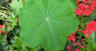 صورة هل يوجد نبات غير اخضر