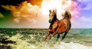 صورة خلفيات خيول منوعه روعه