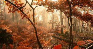 موضوع وصف الخريف