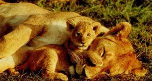 اسماء صغار الحيوانات