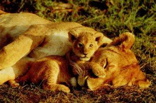 صور اسماء صغار الحيوانات