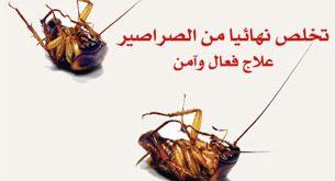 صورة طرق القضاء على الصراصير