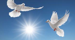 مفهوم السلام العالمي
