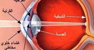 مكونات عين الانسان