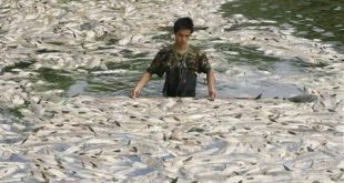 صورة معنى التلوث المائي
