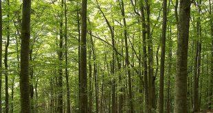 موضوع حول الغابة