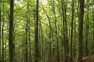 صور موضوع حول الغابة