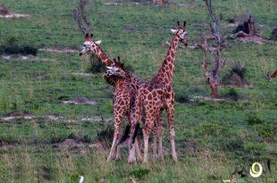 صور كلمة عن الحيوان ,معلومات عن الحيوانات