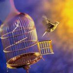 مقالة فلسفية حول الحرية