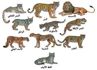 صور هل تعلم عن الحيوان