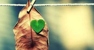 صورة شعر عن الشجرة قصير