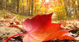 موضوع عن الخريف