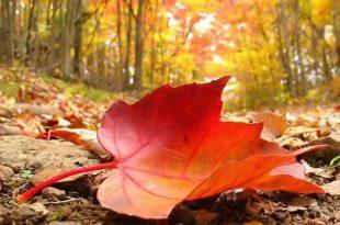 صور موضوع عن الخريف
