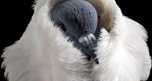 صور لاجمل الطيور بالعالم