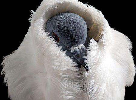 صور صور لاجمل الطيور بالعالم