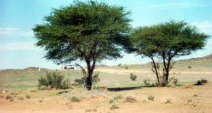 صورة تعريف الشجرة وفوائدها