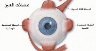 مطوية حول العين