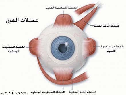 صور مطوية حول العين