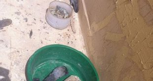 صورة احدث طرق وضع الماء للطيور اثناء الحر الشديد واسهلها