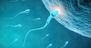 صورة اعشاب تساعد على الحمل