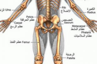 صور ما هو عدد العظام الموجودة في جسم الانسان