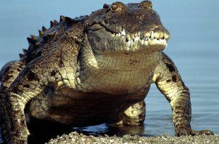 بالصور اضخم حيوان في العالم a7833f3c66d4742262116fa544be504b 310x205
