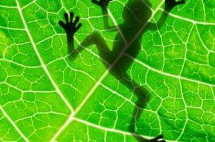 صور موضوع البيئه من حولنا , تعريف البيئة