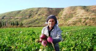تعريف الزراعة المعيشية