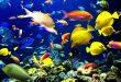 صور موضوع عن الاسماك