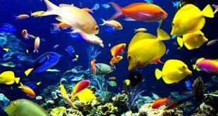 موضوع عن الاسماك