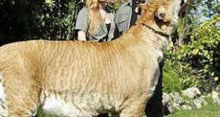 ضخم حيوان في العالم