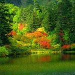 مقالة رائعة عن جمال الطبيعة