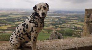 صور ماهى اخطر انواع الكلاب فى العالم