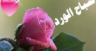 صباح الورد والفل