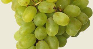 صور الفاكهة الاكثر فائدة العنب
