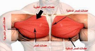 فوائد البطاطا قبل التمرين