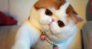 صوره متى تبلغ القطط