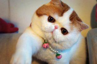 صور متى تبلغ القطط