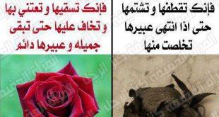 صورة الفرق بين الاعجاب والحب