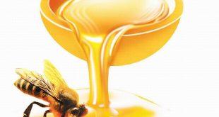 صور مقال علمي عن العسل قصير