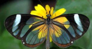 اجمل مخلوقات الارض شفافيه