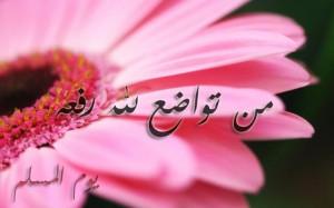 ابيات شعر عن التواضع , جمال الخلاق