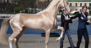 صور لاجمل حصان بالعالم