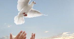 صورة موضوع خاص بالسلم والسلام