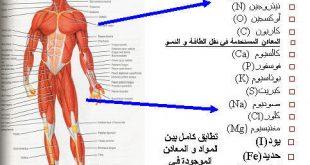 كم عدد عضلات جسم النسان